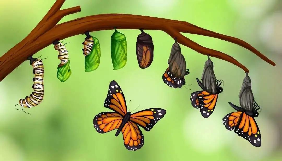 【活动招募】小昆虫大学问,走进昆虫的奇妙世界