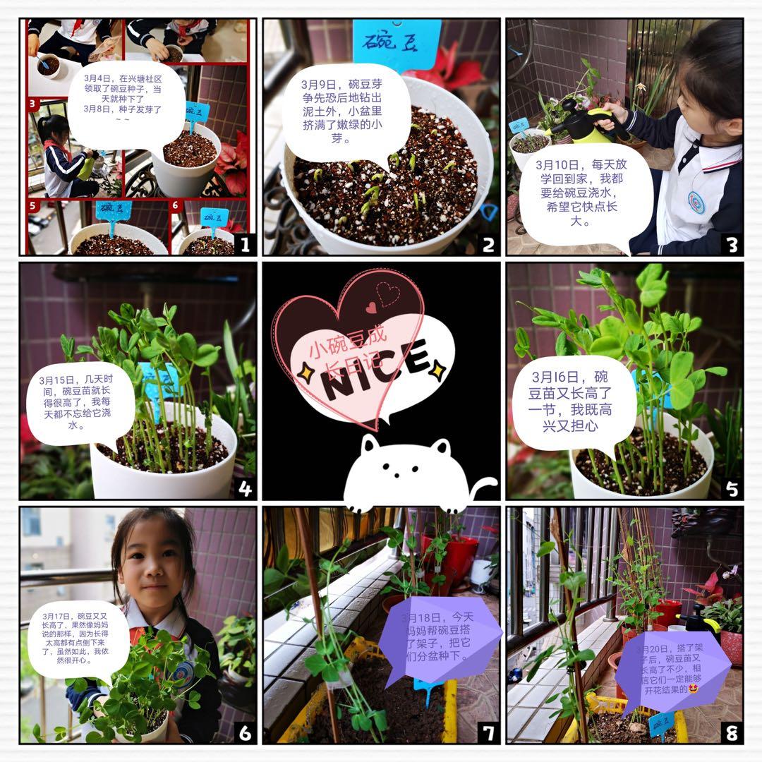 """兴塘社区线上植树节""""家庭种植观察笔记""""活动"""